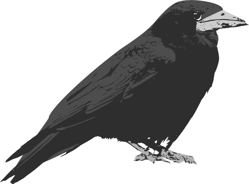 Free Raven