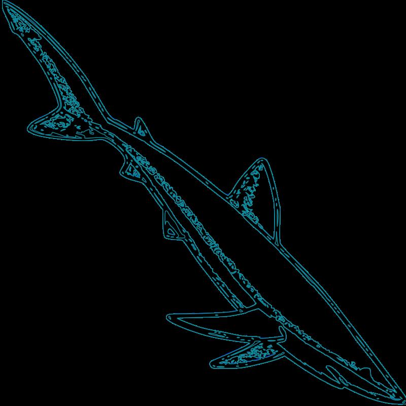 Free Blue Shark