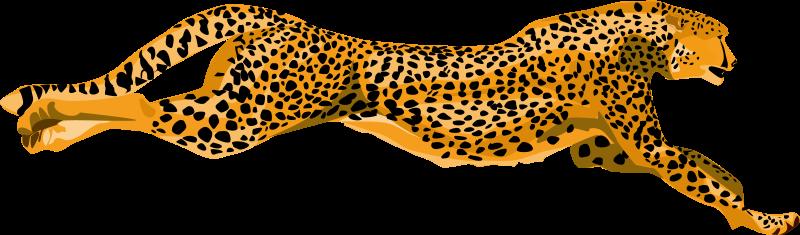 Free leopard_cheetah
