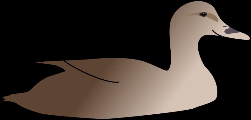 Free Duck