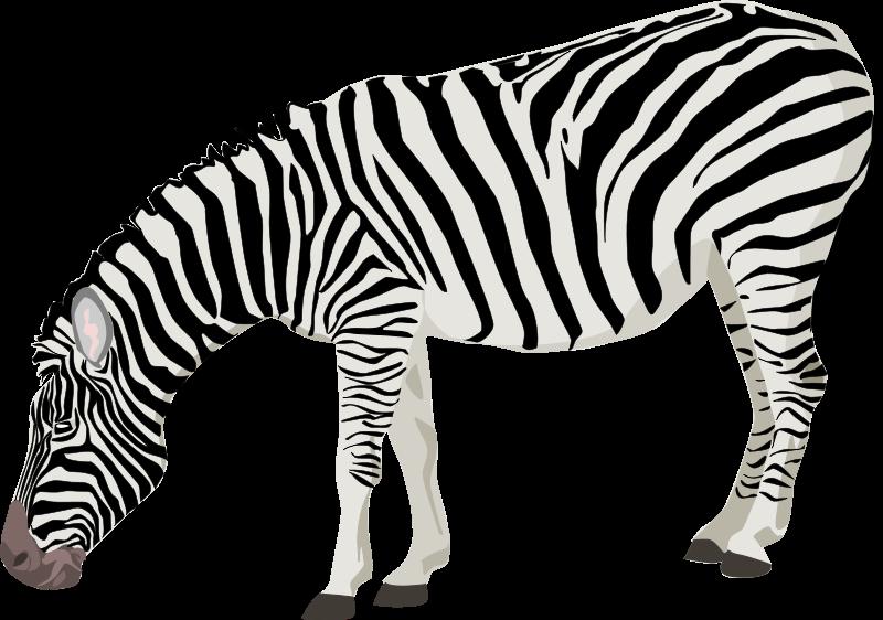 Free zebra