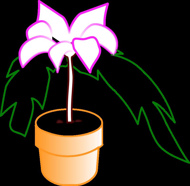 Free Planta