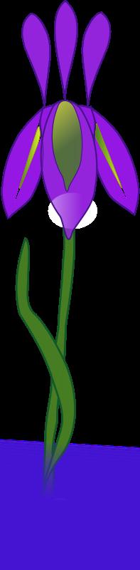 Free Clipart: Iris | Flowers | missiridia