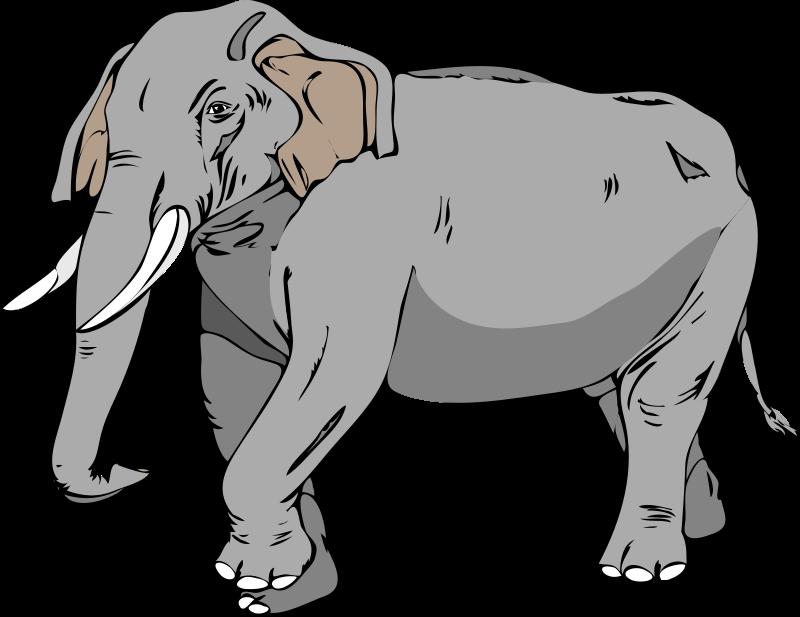 Free Architetto -- Elefante 02