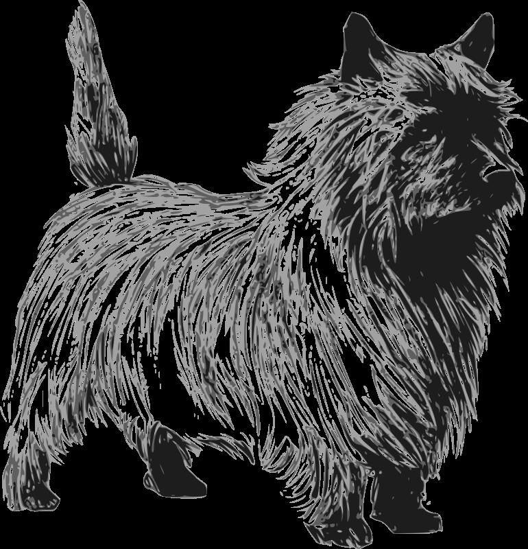 Free Cairn terrier