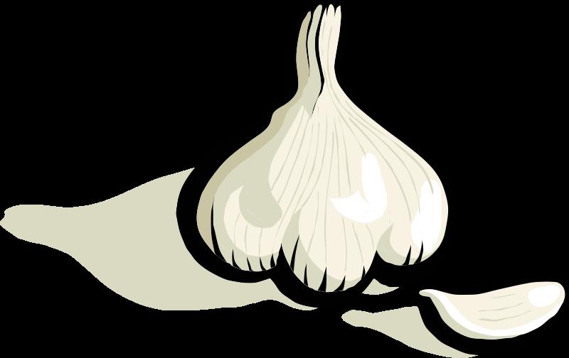 Free Clipart: Garlic | johnny_automatic