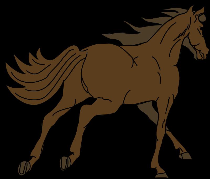 Free Architetto -- Cavallo 16