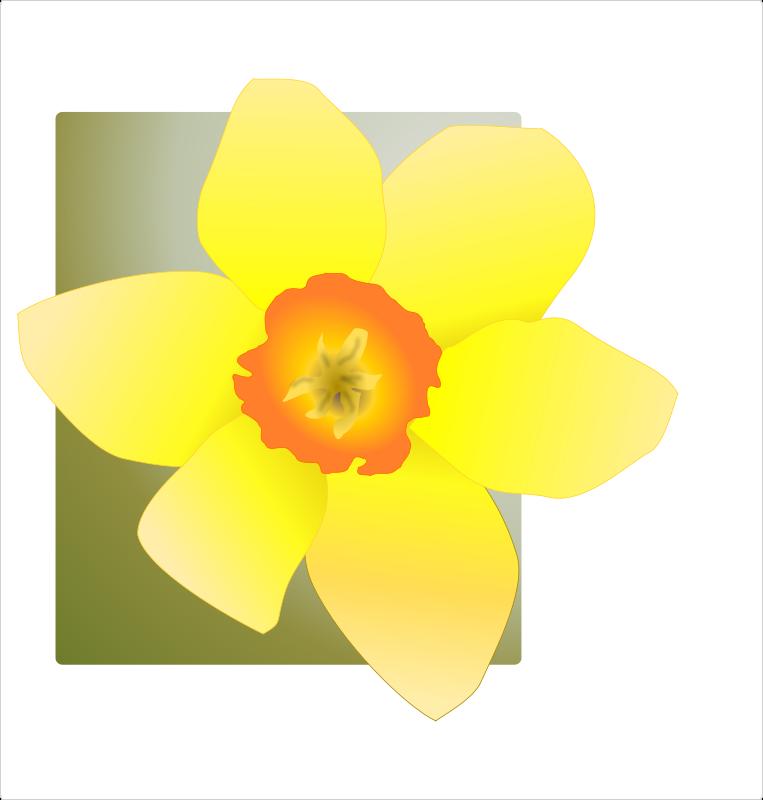 Free Clipart: Daffodil | kattekrab