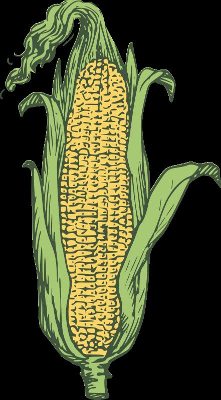 Free ear of corn - colored