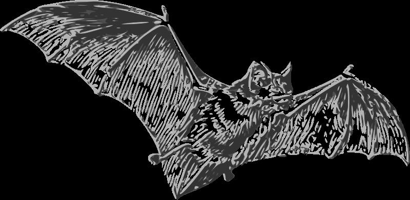 Free bat