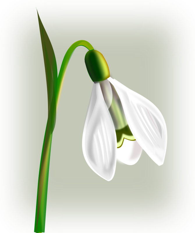 Free Clipart: Flowers snowdrop | gurica