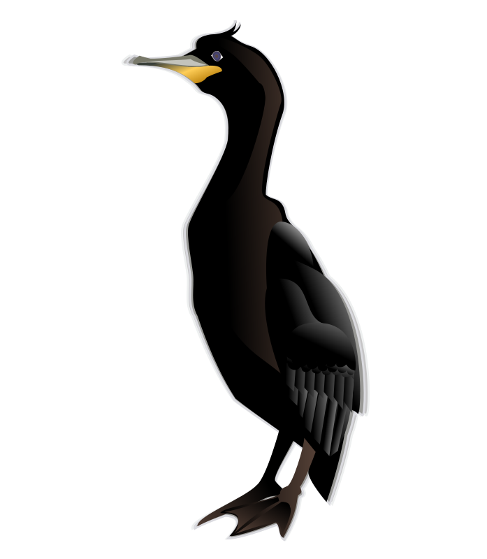 Free Clipart: Cormorant | Anonymous