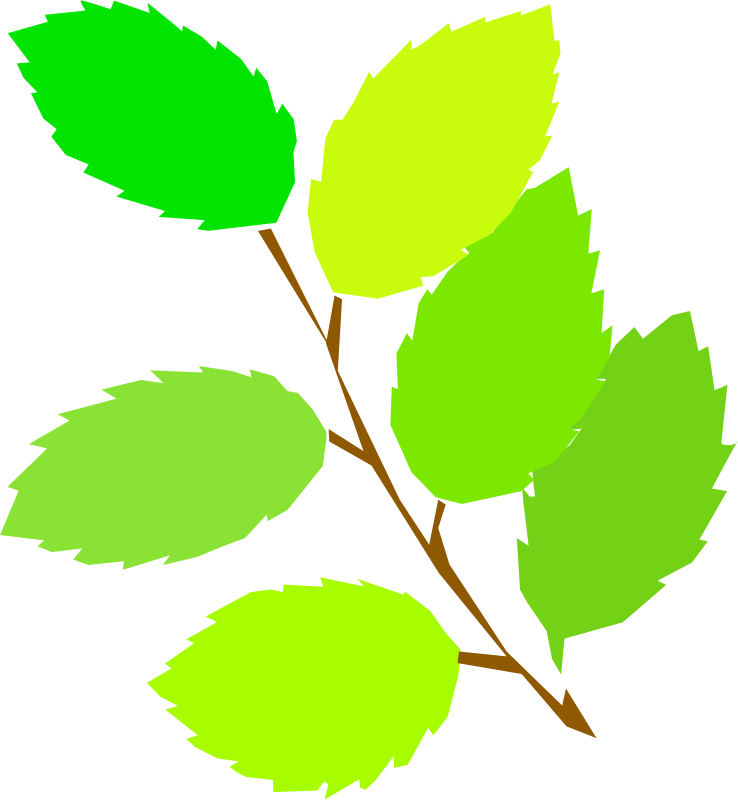 Free simple spring, new leaves