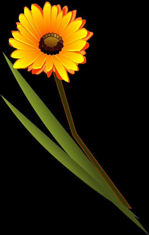 Free flowers_gerbera