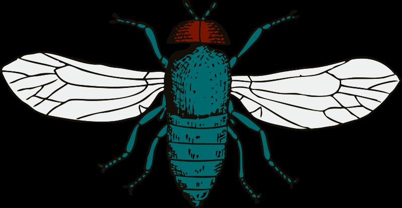 Free blue bottle fly