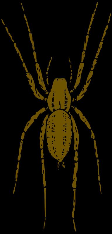 Free brown spider