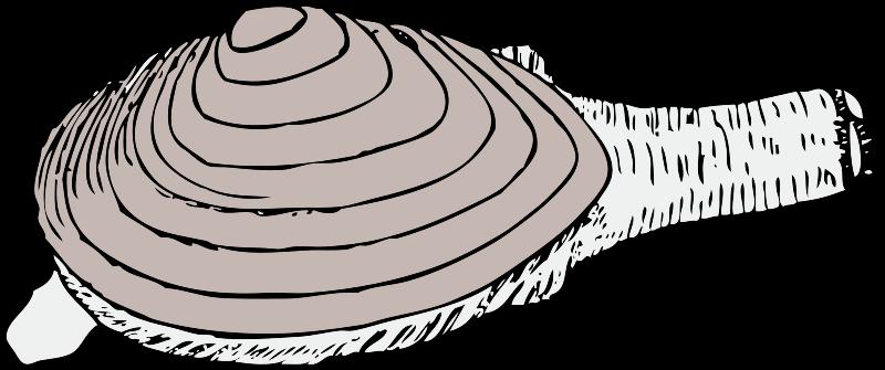 Free clam