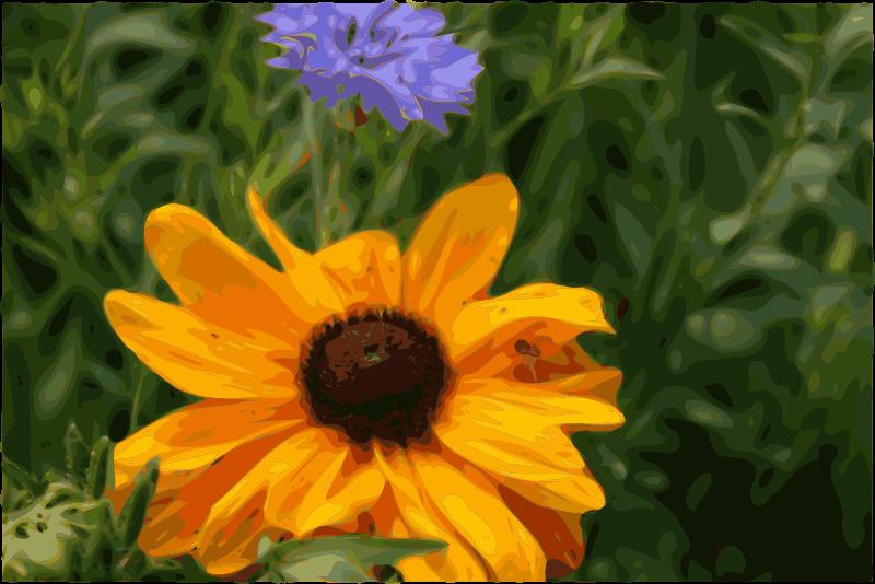 Free Spider flower