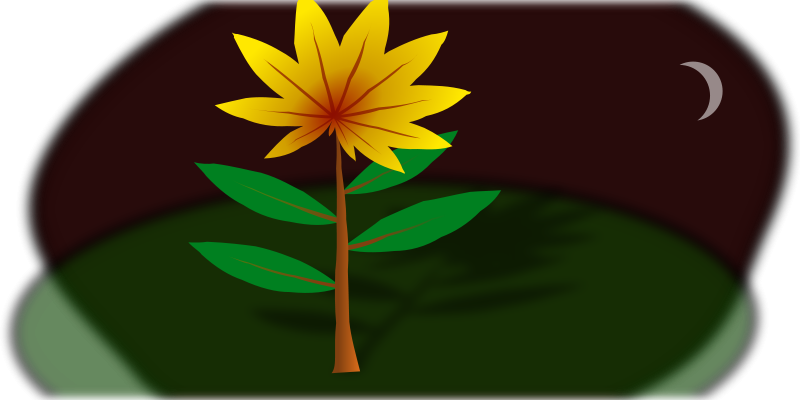 Free Midnight Flower