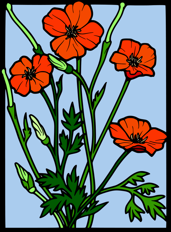 Free Coloured Poppy stained glass