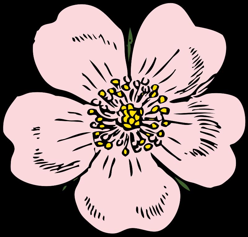 Free wild rose