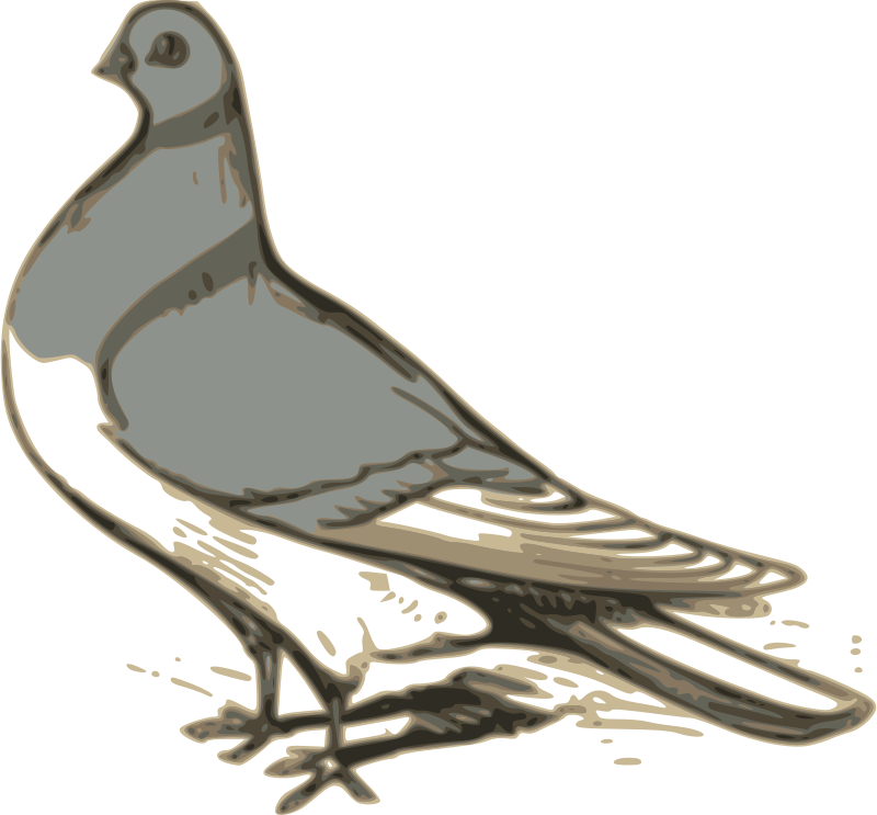 Free pigeon illustration