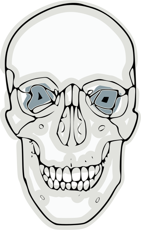 Free digitalized human skull