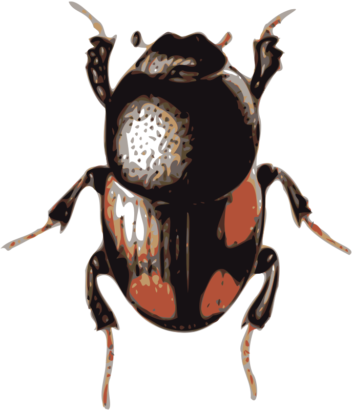 Free beetle (caccobius)