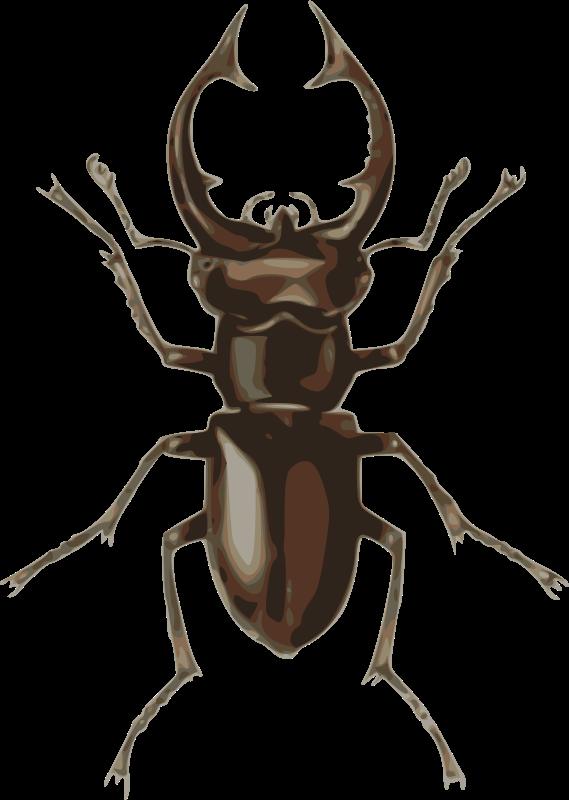 Free stag beetle (lucanus elephas)