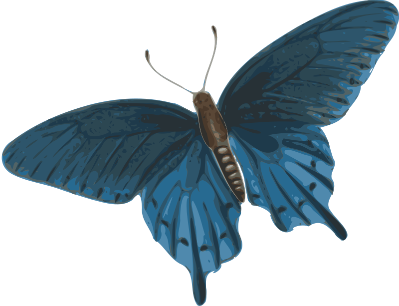 Free butterfly (papilio philenor) - top