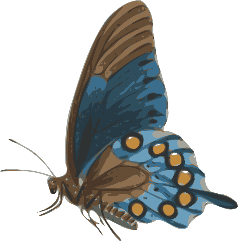 Free butterfly (papilio philenor) - side