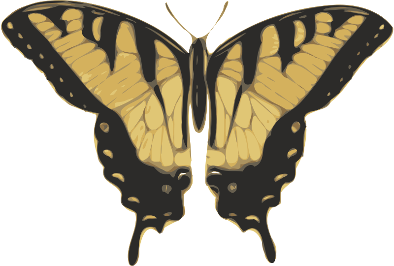 Free butterfly (papilio turnus) top view