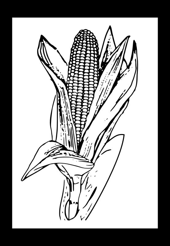 Free corn