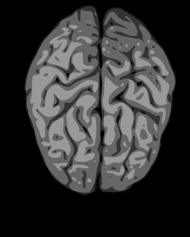 Free grey brain