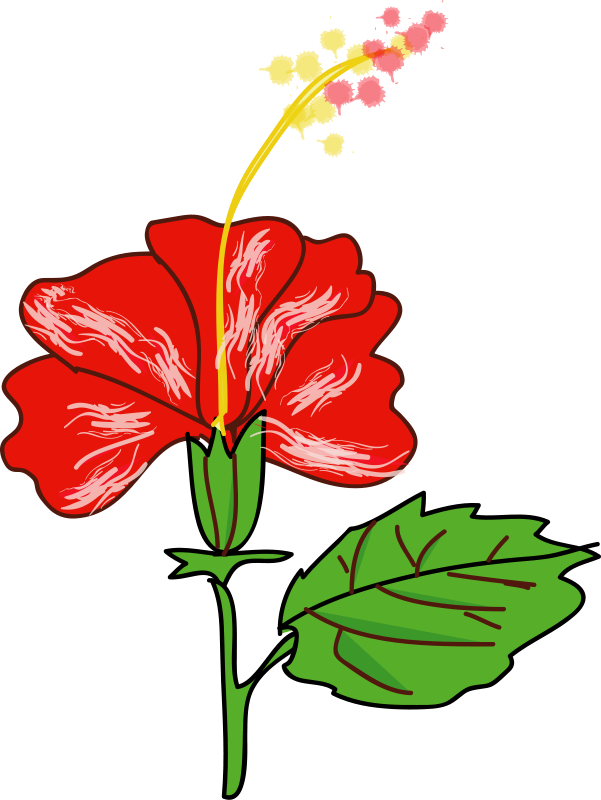 Free Flower Hibiscus