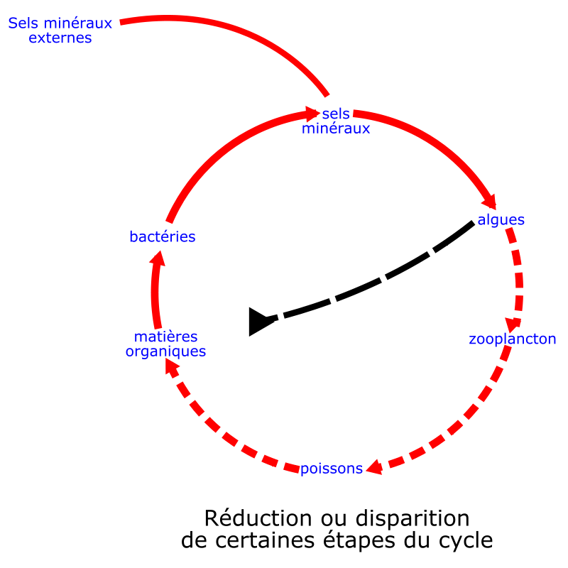 Free eutrophisation cycle