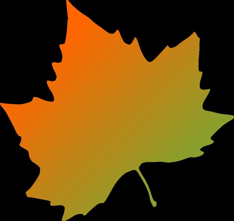 Free plane tree autumn leaf