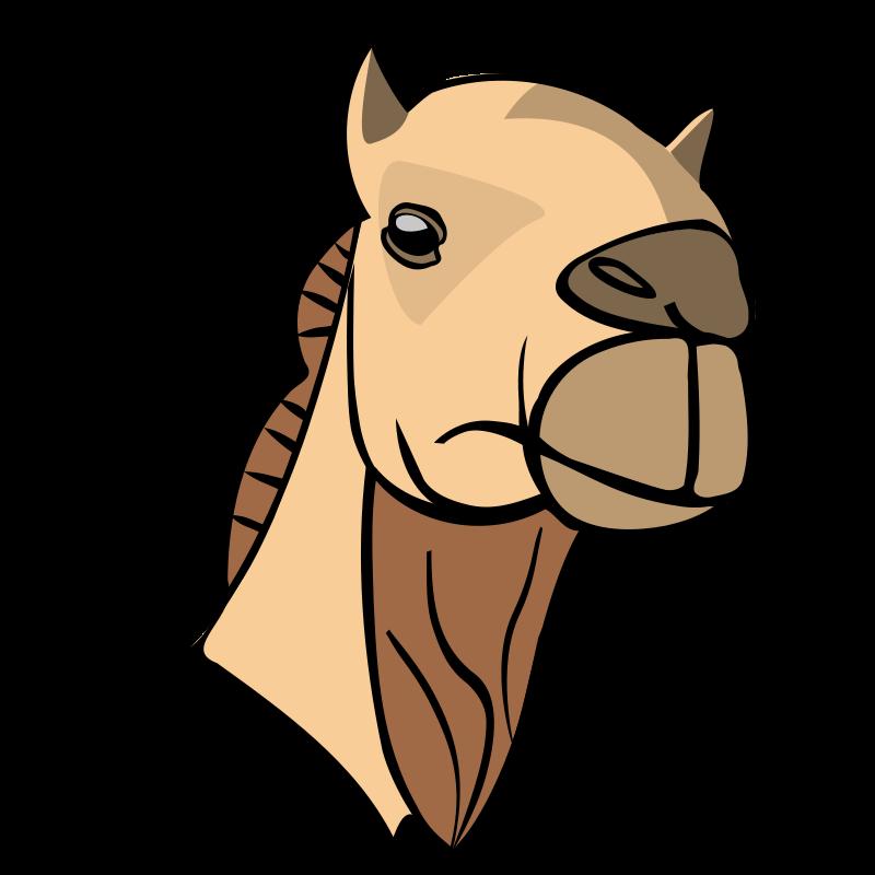 Free Camel head