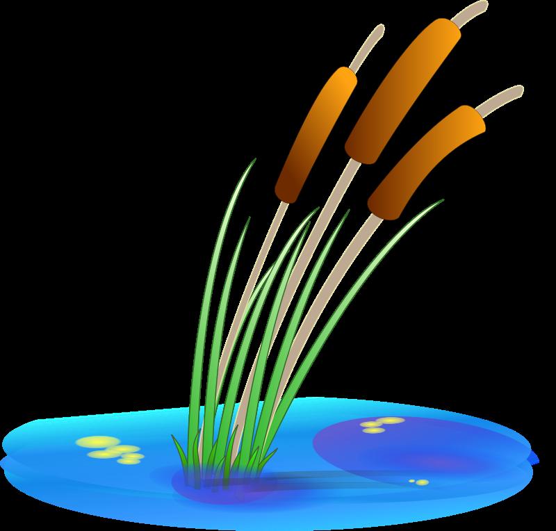 Free reed