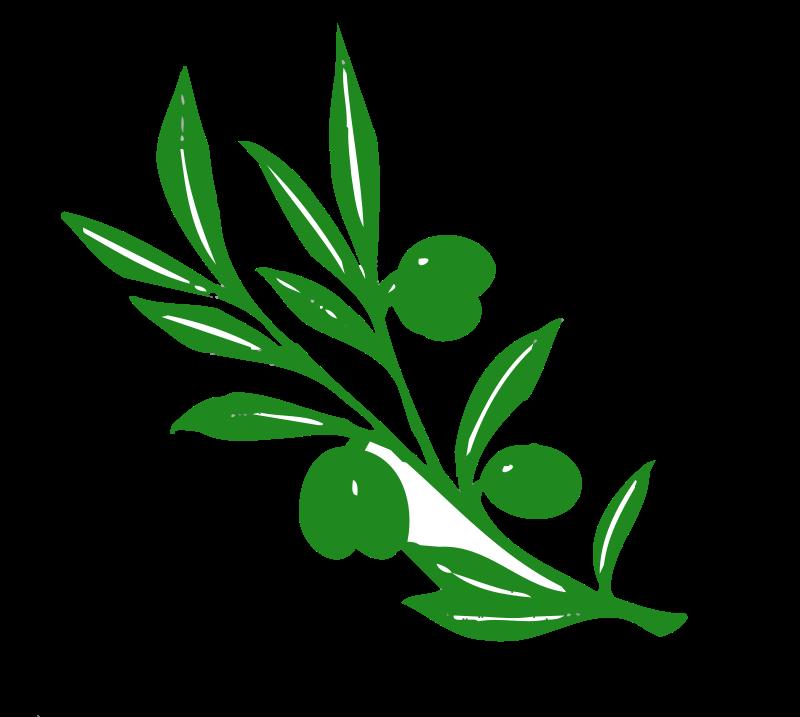 Free olive tree branch