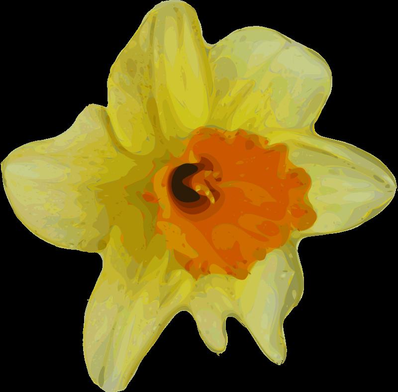 Free flower-16