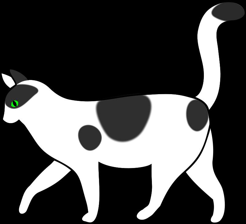 Free white cat walking