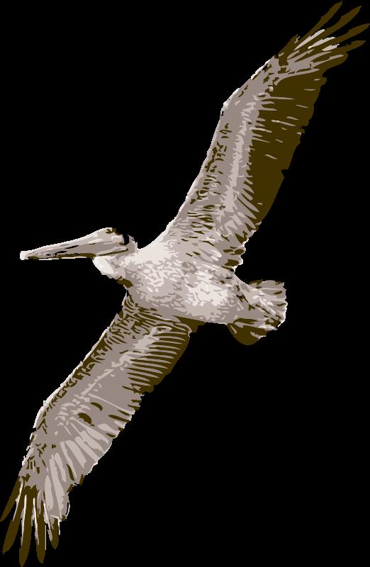 Free pelican