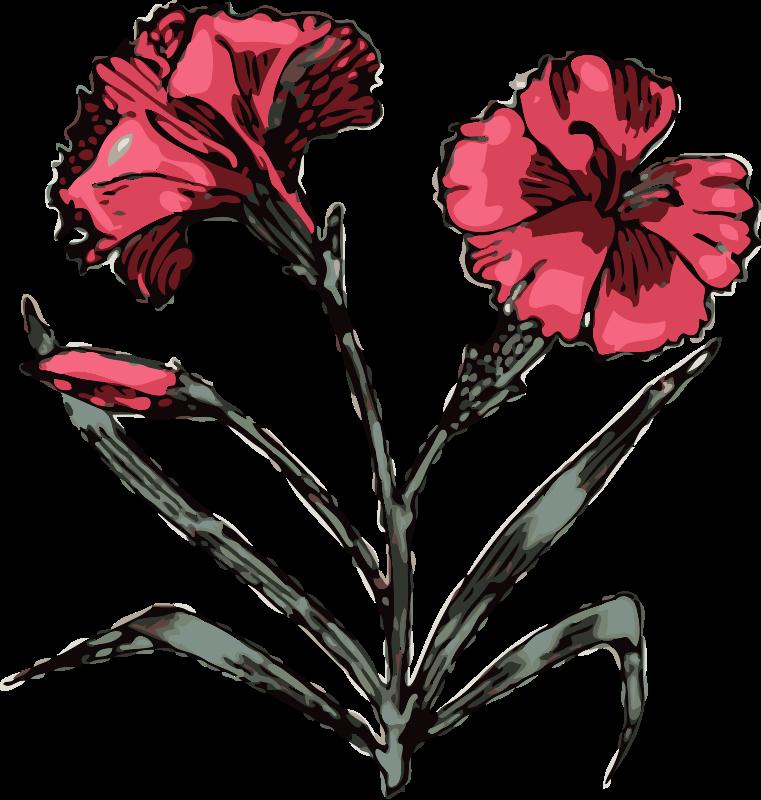 Free carnation