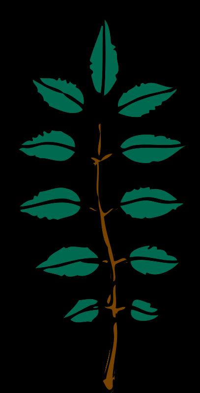 Free ash leaves