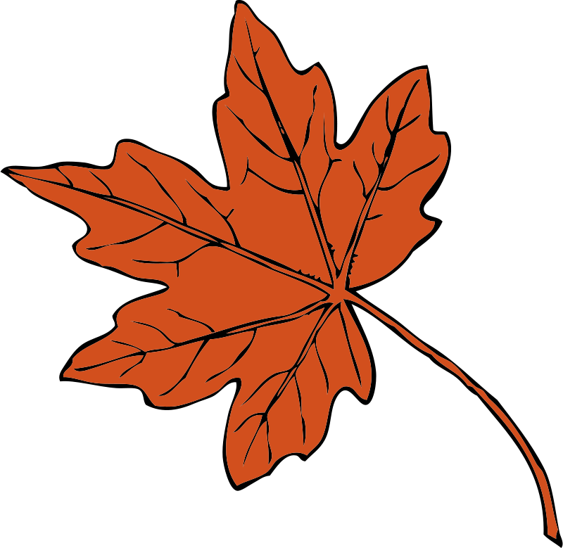 Free Clipart: Maple leaf | johnny_automatic