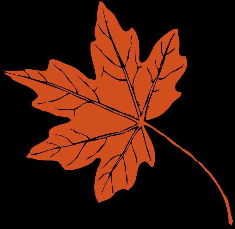 Free maple leaf