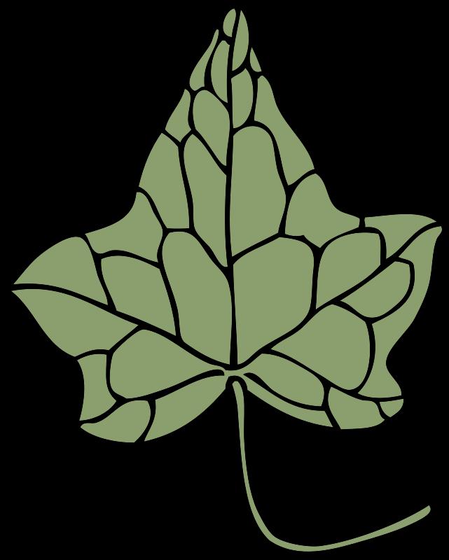 Free ivy leaf 5
