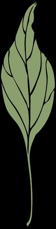 Free ivy leaf 4