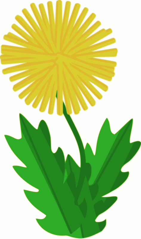 Free flower - dandelion
